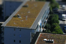 Mise en végétation de toits plats et protection des constructions
